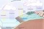 Pourquoi l'eau de mer est-elle salée ? (juillet-août-septembre 2018)